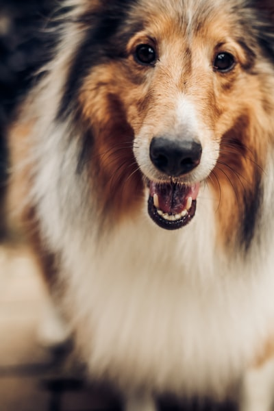 How to treat your dog for kidney disease
